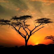 Bonsoir d'Afrique