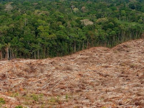 JF Guégan: le lien entre déforestation et propagation du virus Ebola