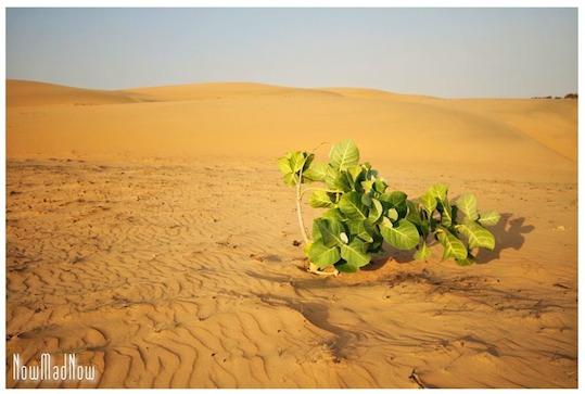 Sénégal : désert de Lompoul, le désert cannibale