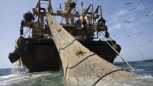 Les pêcheurs inquiets du retour des filets européens