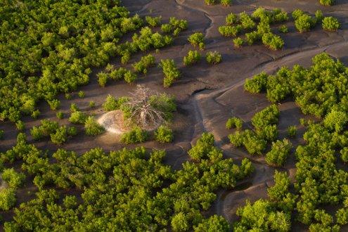 Dakar Oceanium is aiming at environmental protection